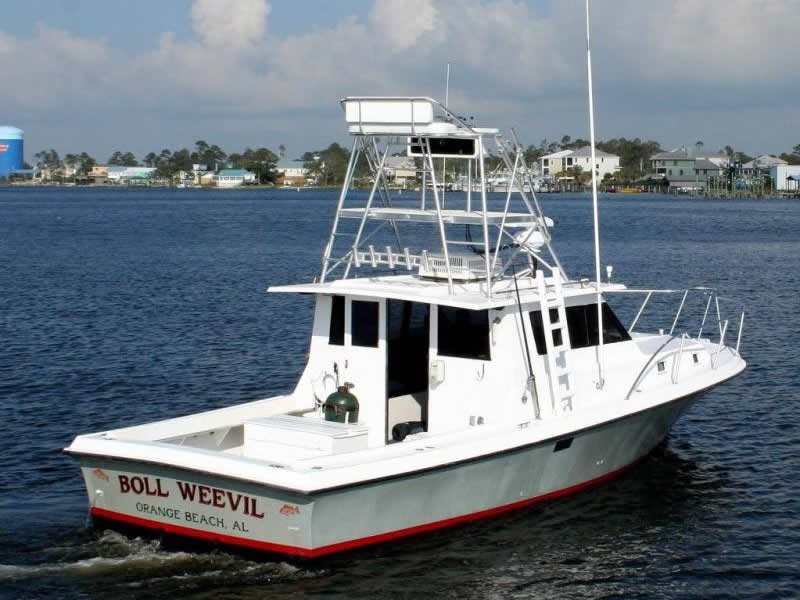 Boll Weevil Setting Sail